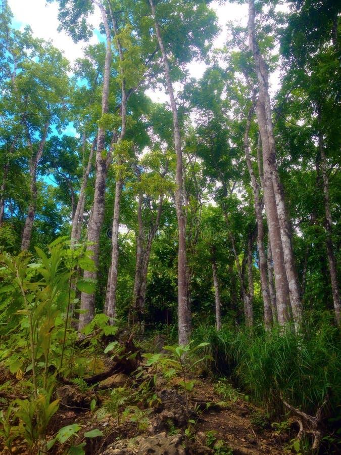 Alberi forestali immagine stock libera da diritti