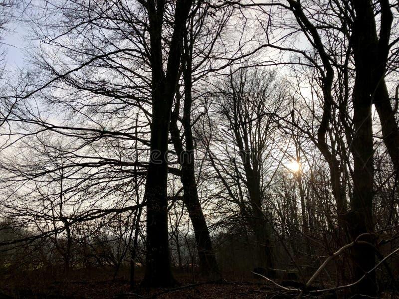 Alberi forestali contro il sole immagine stock