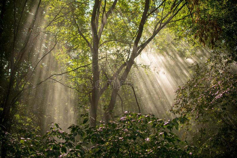 Alberi forestali di autunno Ambiti di provenienza di legno verdi di luce solare della natura fotografia stock libera da diritti
