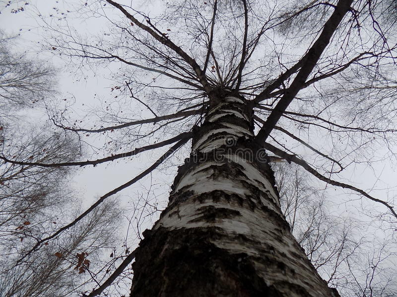 Alberi forestali di autunno nuvolosi immagini stock