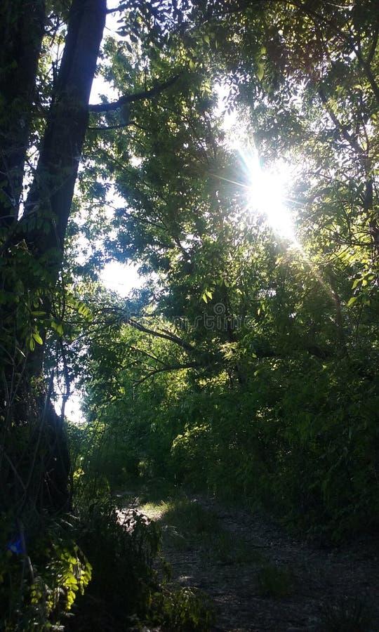 Alberi forestali di estate immagine stock libera da diritti