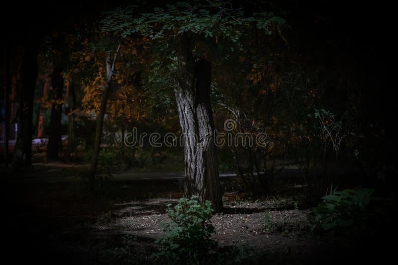 alberi forestali nebbiosi di notte lunatica scura, orrore e concetti spaventosi fotografie stock
