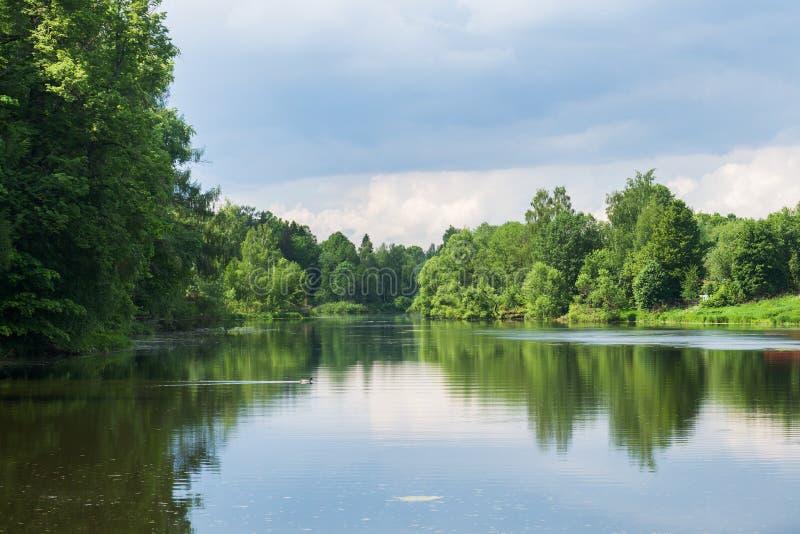 Alberi forestali sulla sponda del fiume Riflessione nel fiume un giorno di estate soleggiato immagini stock libere da diritti