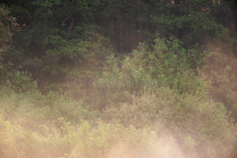 Alberi in foschia ad alba fotografia stock