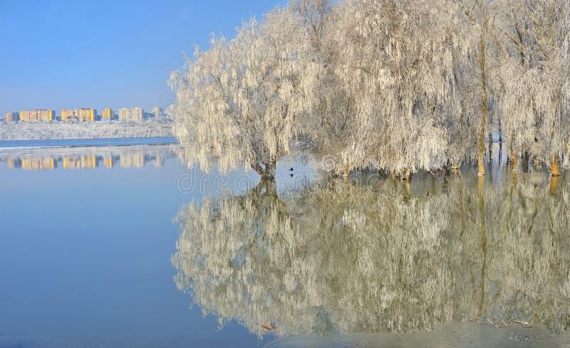 Alberi gelidi sul Danubio fotografia stock libera da diritti