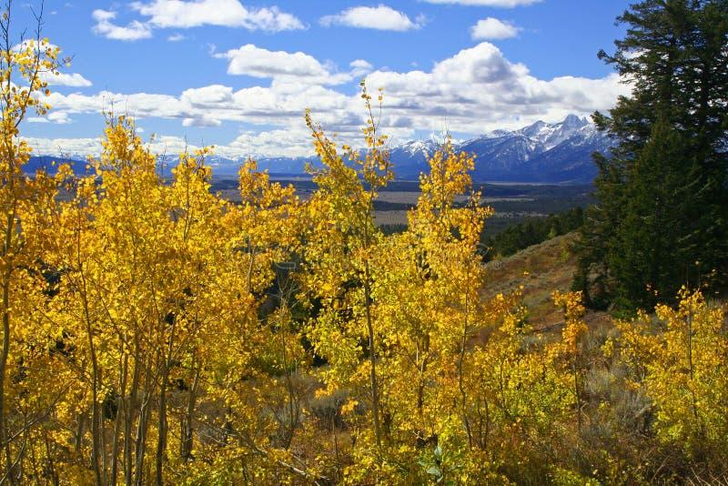 Alberi gialli dell'Aspen sopra la valle fotografia stock libera da diritti