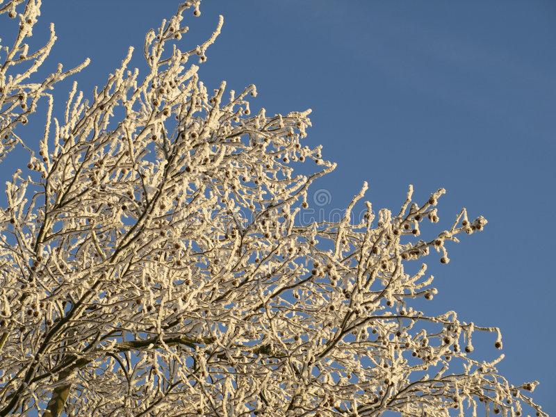 Download Alberi glassati immagine stock. Immagine di cielo, freddo - 3892779