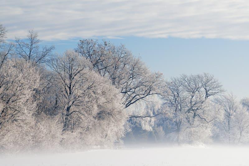 Alberi glassati in nebbia fotografia stock libera da diritti