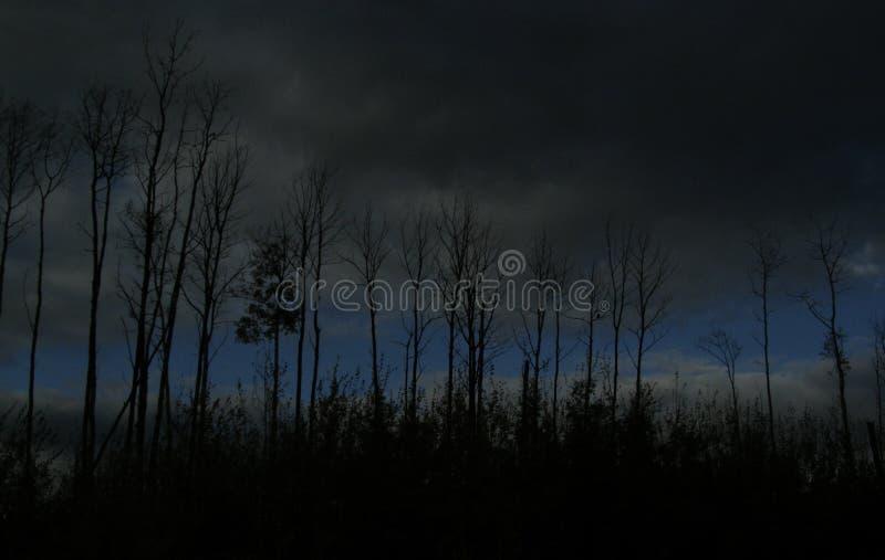 Alberi illuminati dalla luna fotografie stock libere da diritti
