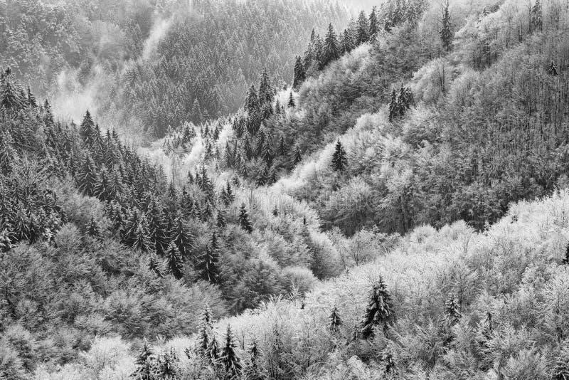 Alberi innevati bianchi neri fotografia stock