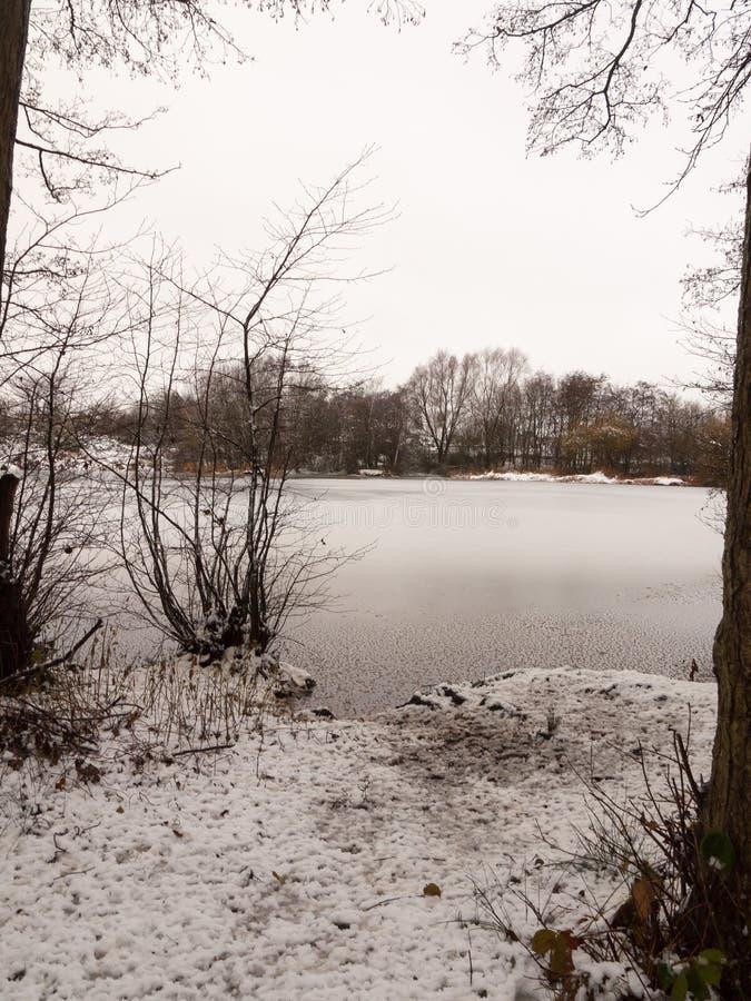 alberi innevati della riva del lago congelati inverno dicembre di scena del lago immagine stock libera da diritti