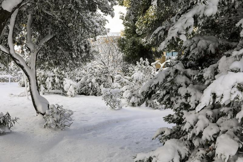 Alberi innevati di mattina di inverno bei nel parco della città di Atene, Grecia, ottava del gennaio 2019 immagine stock