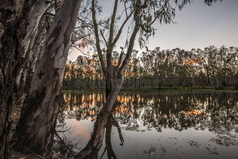 Alberi in lago Mulwala Australia immagini stock