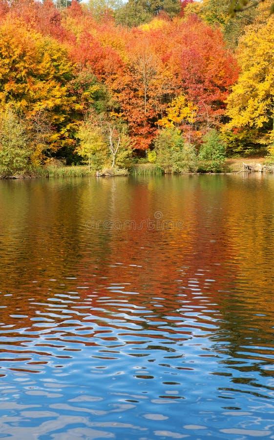 Alberi luminosi di autunno fotografia stock
