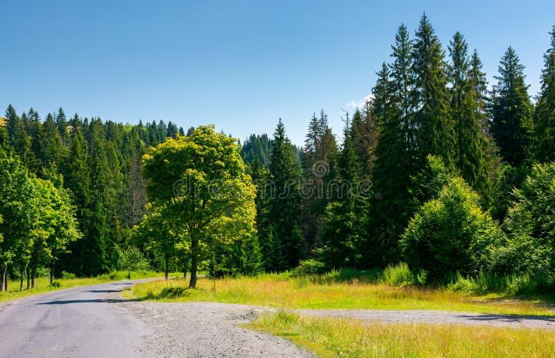 Alberi lungo la strada di bobina attraverso la foresta fotografie stock