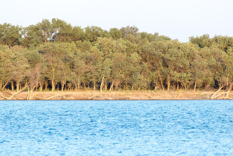 Alberi lungo lo Syr Darya kazakhstan fotografie stock libere da diritti