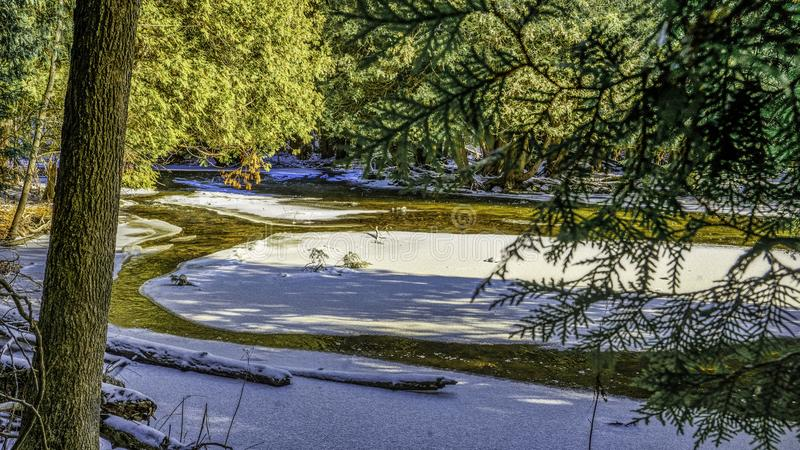 Alberi lungo una corrente coperta di ghiaccio fotografie stock