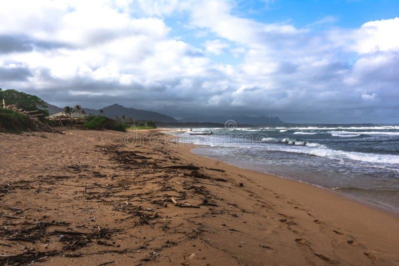 Alberi morti lungo la spiaggia di Waipouli, Kauai, Hawai fotografia stock libera da diritti