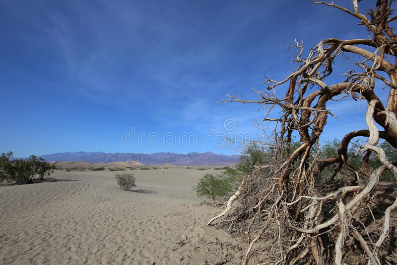 Alberi morti nel Death Valley, California fotografia stock