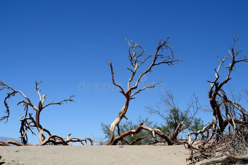 Alberi morti nel parco nazionale di Death Valley, California fotografie stock