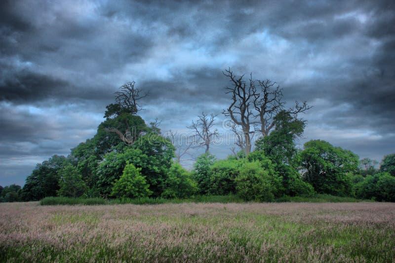 Alberi morti in siluetta contro un cielo grigio fotografie stock