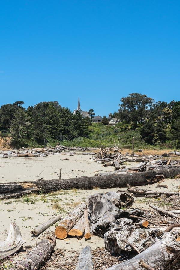 Alberi morti sulla spiaggia, Mendocino, California fotografia stock libera da diritti