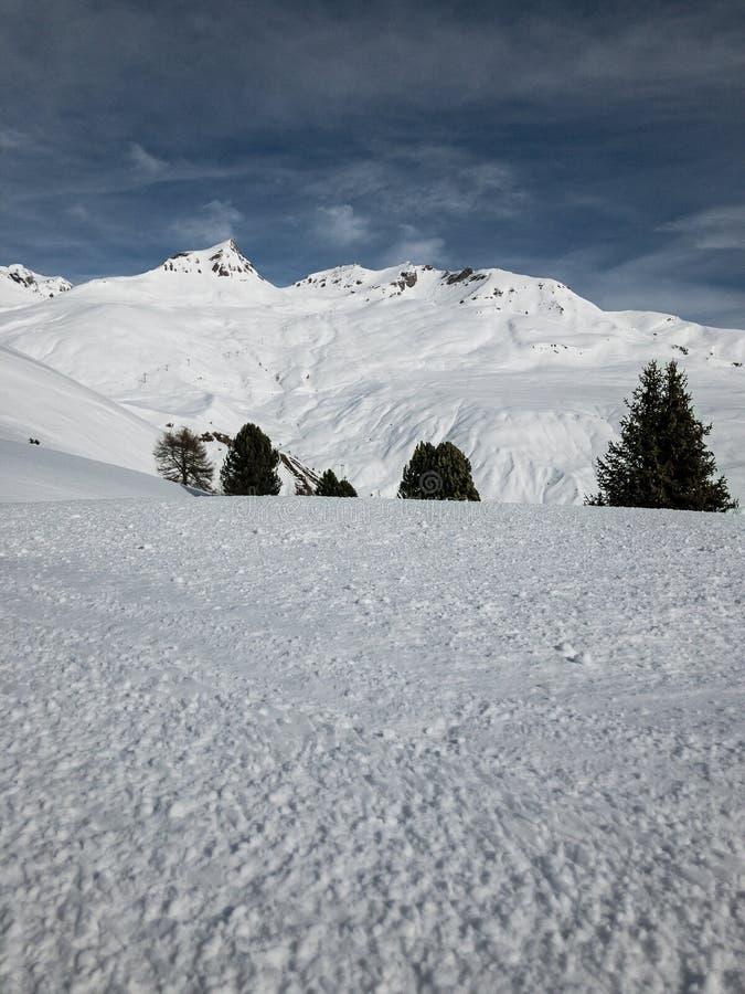 Alberi nascondentesi su una collina nevosa immagine stock libera da diritti