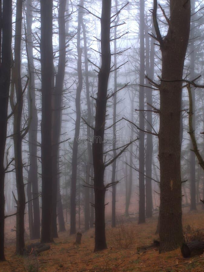 Alberi in nebbia fotografia stock libera da diritti