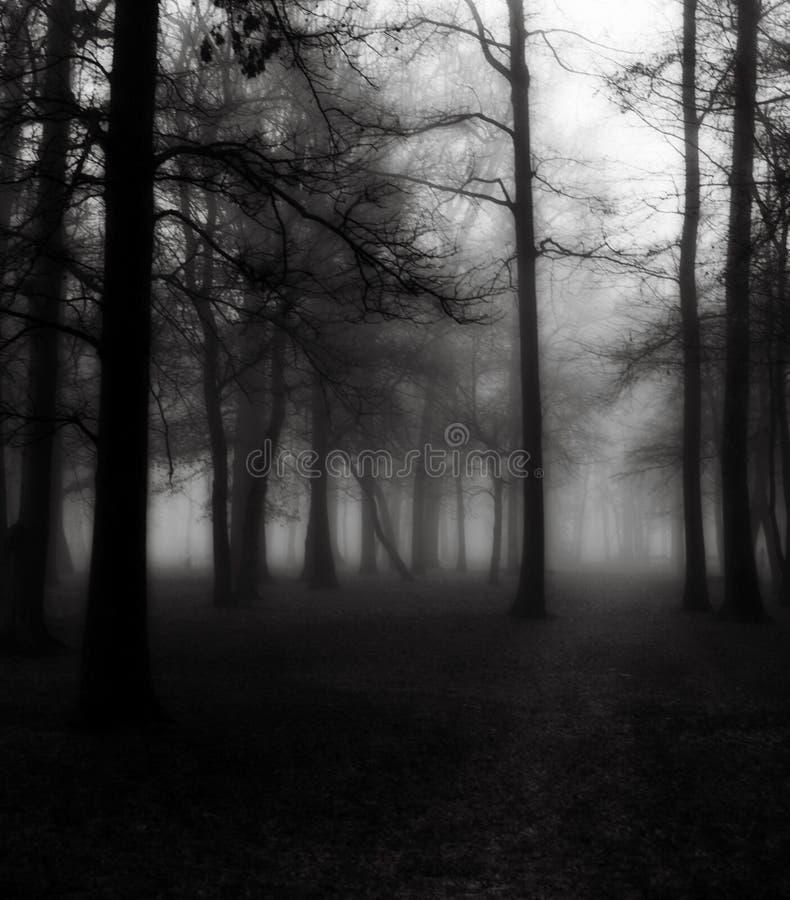 Alberi in nebbia di mattina immagine stock