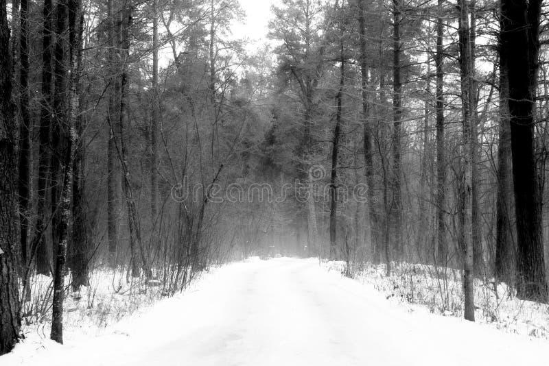 Alberi nebbiosi del gelo di manifestazione di inverno della foresta fotografia stock libera da diritti