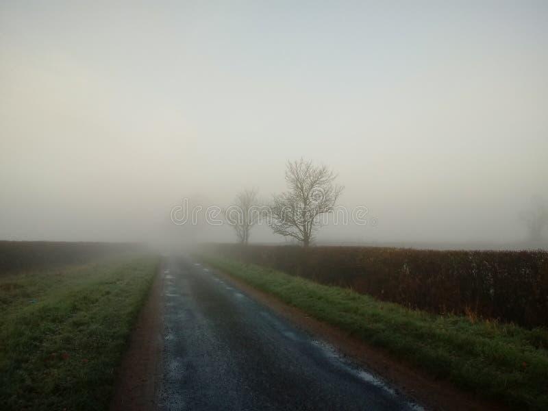 Alberi nebbiosi di mattina fotografie stock libere da diritti