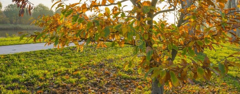 Alberi nei colori di caduta lungo un canale in un prato verde al tramonto fotografia stock