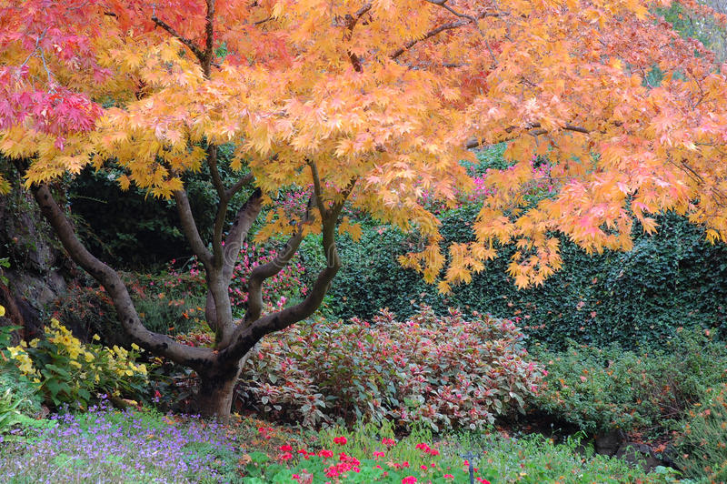 Alberi nei giardini di Butchart immagine stock