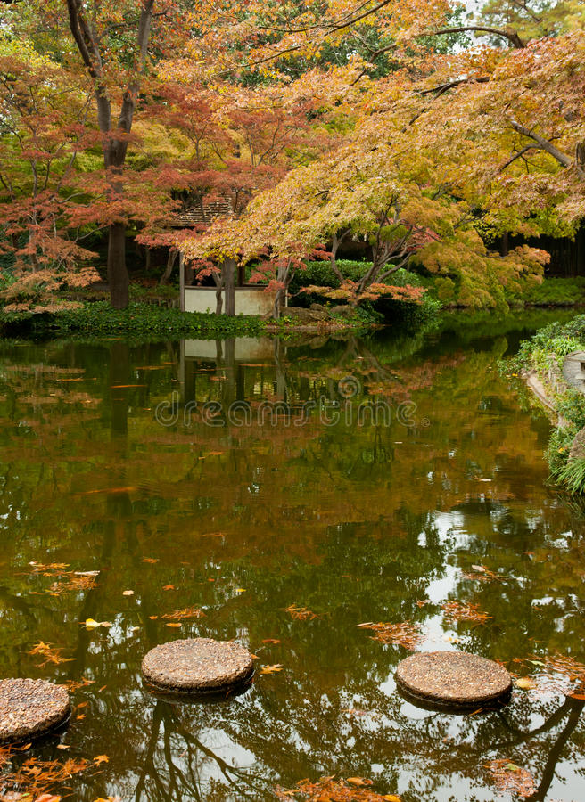Alberi nel colore di caduta da uno stagno fotografia stock for Stagno da giardino