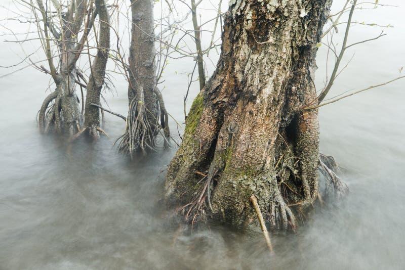 Alberi nel lago fotografia stock