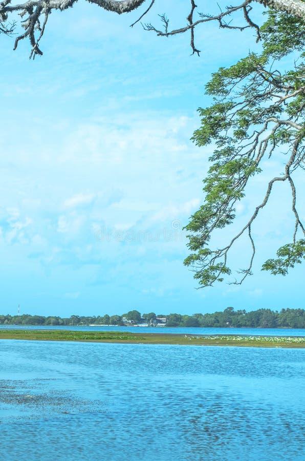 Alberi nel lago Tissa, Sri Lanka fotografia stock
