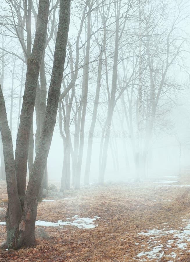 Alberi nel paesaggio nebbioso scuro della foresta immagine stock libera da diritti