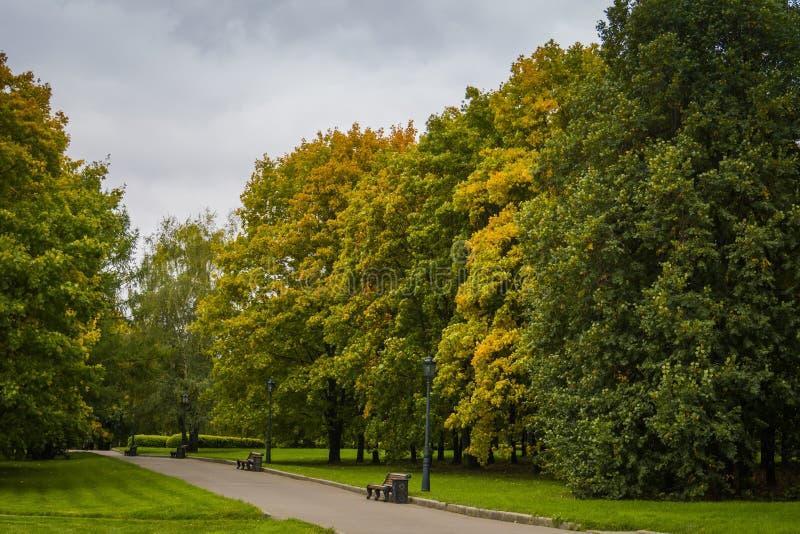 Alberi nel parco della città di autunno immagine stock libera da diritti