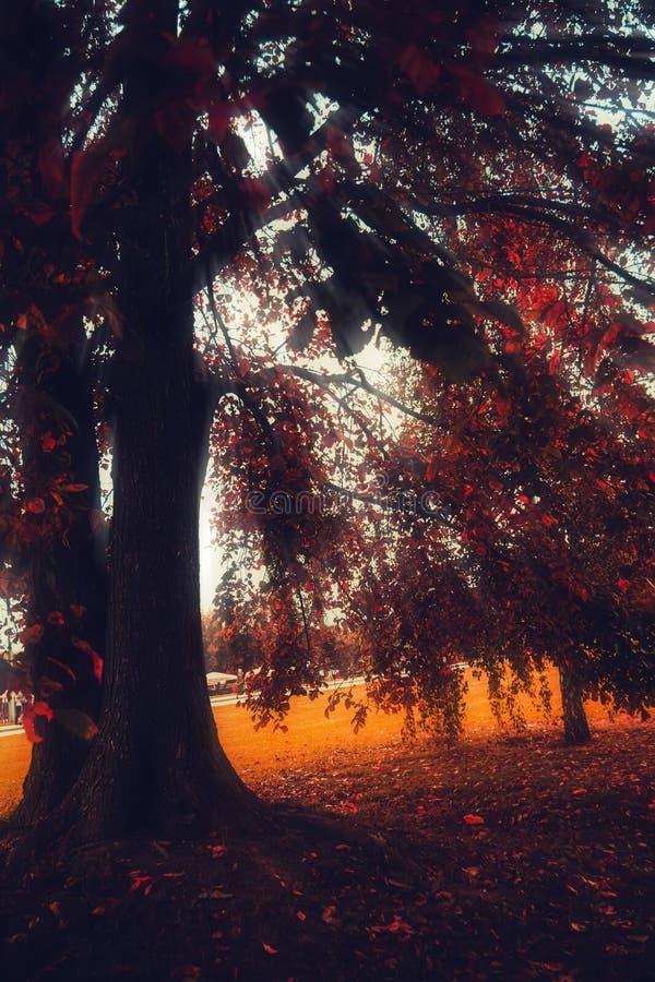 Alberi nel parco della città di autunno fotografie stock libere da diritti