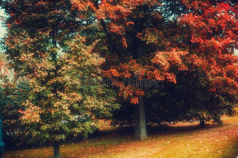 Alberi nel parco della città di autunno fotografia stock