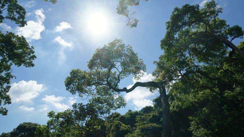 Alberi nell'ambito di forte luce solare fotografie stock libere da diritti