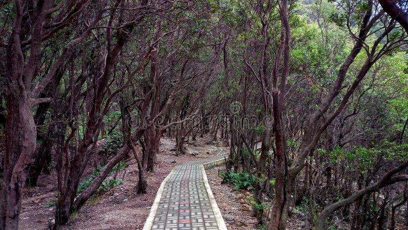 alberi nell'area del lago del putih di Kawah, Bandung, Indonesia immagini stock libere da diritti