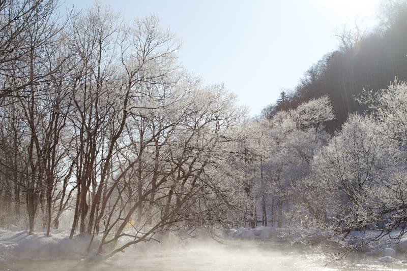 Alberi nell'orario invernale fotografia stock libera da diritti