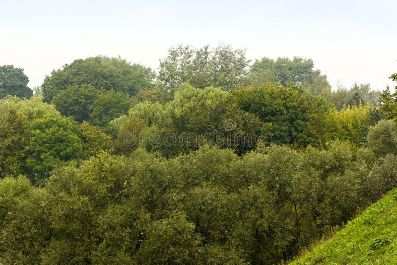 Alberi nella foresta immagine stock