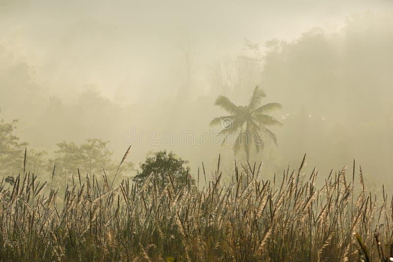 Alberi nella foschia - Suan Phueng, Ratchaburi, Tailandia fotografie stock libere da diritti