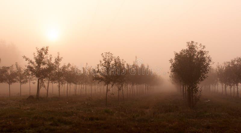Alberi nella nebbia immagini stock libere da diritti