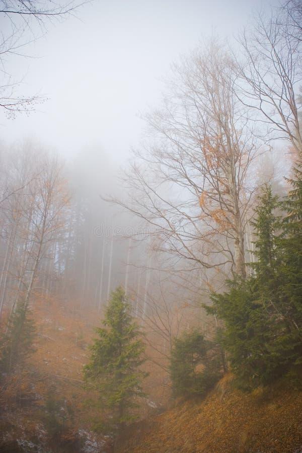 Download Alberi nella nebbia immagine stock. Immagine di pendio - 3888755
