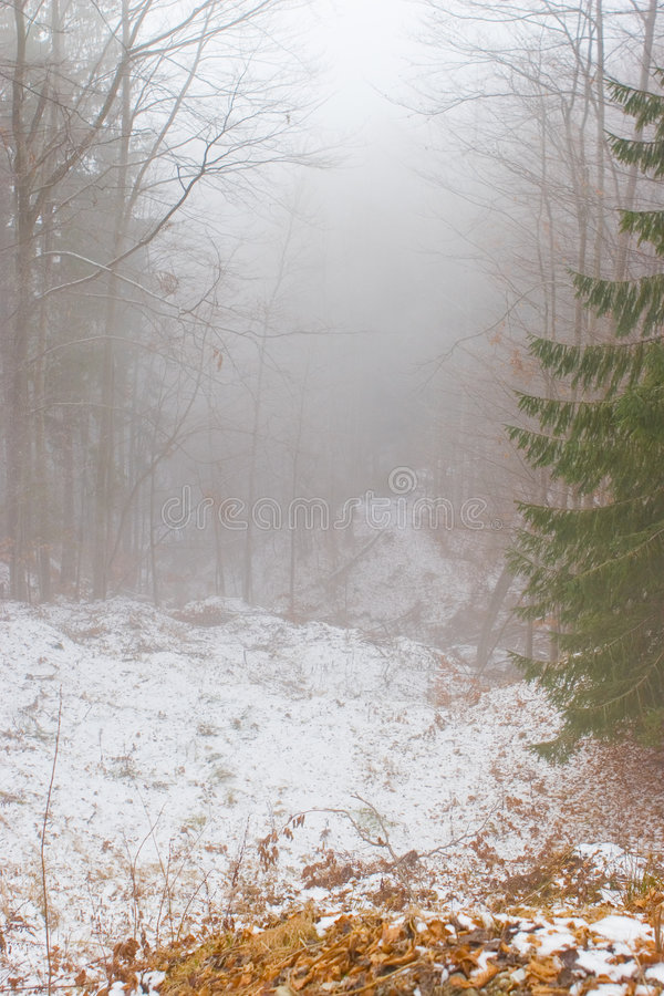 Download Alberi nella nebbia immagine stock. Immagine di alto, nebbioso - 3888765