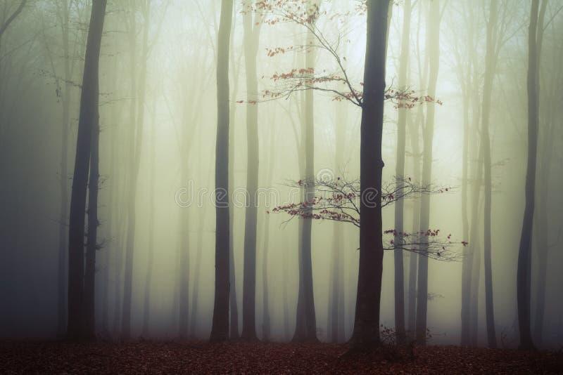 Alberi nella nebbia fotografia stock