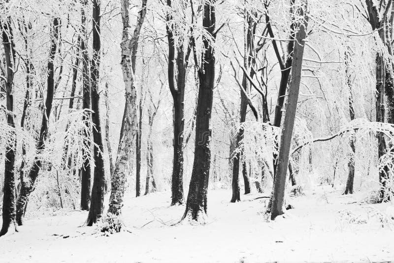 Alberi nella neve fotografie stock libere da diritti